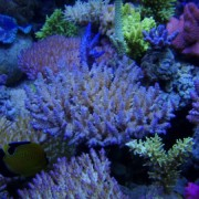 t5_coral_light_new_generation-pic